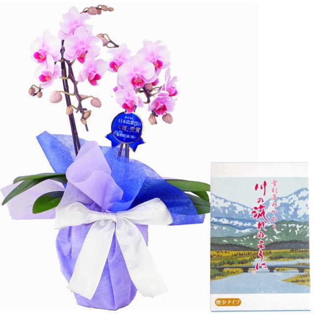 ミディ胡蝶蘭 線香セット 2本立 ピンク色 丸叶むらた 川の流れのように 雪割草の香り 約140g 煙少タイプ