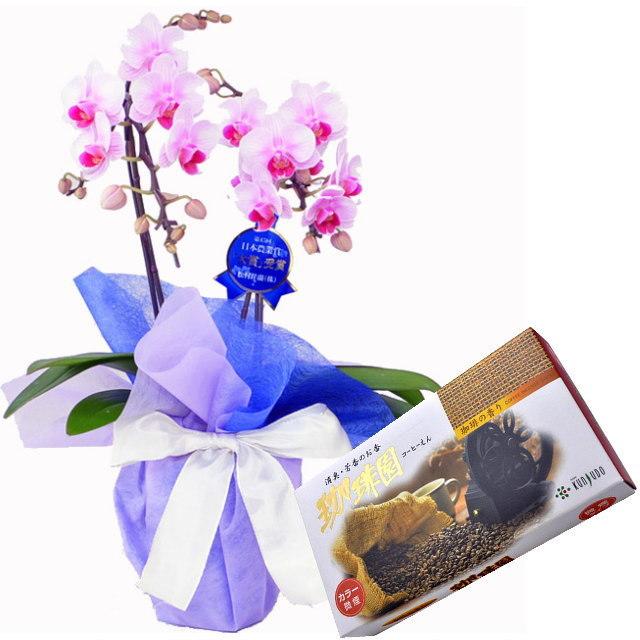 ミディ胡蝶蘭 ピンク色 2本立ち 薫寿堂のお線香 珈琲園 微煙タイプ #580 珈琲の香り セット
