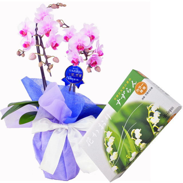 ミディ胡蝶蘭 ピンク色 2本立ち 薫寿堂のお線香 花かおりすずらん 微煙タイプ #632 セット