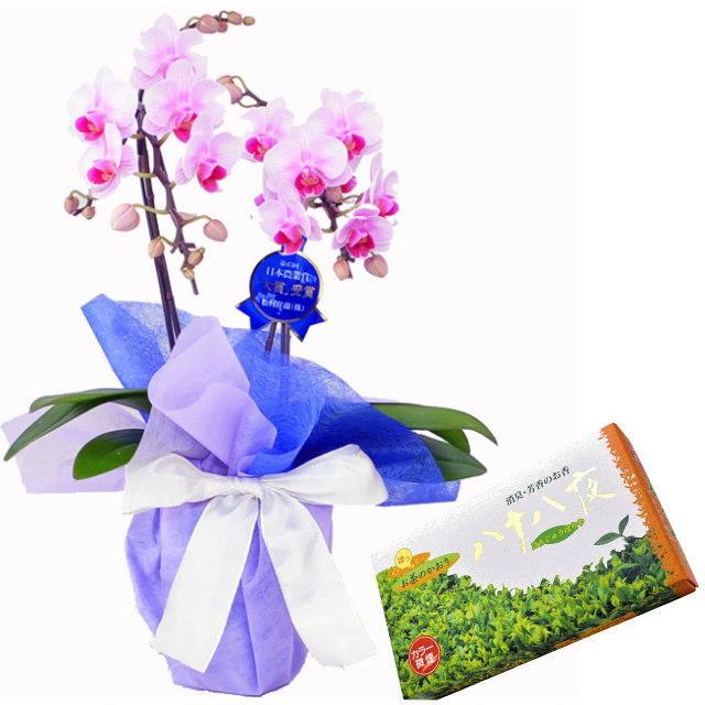 ミディ胡蝶蘭 ピンク色 2本立ち 薫寿堂のお線香 八十八夜 微煙タイプ #681 お茶のかおり セット