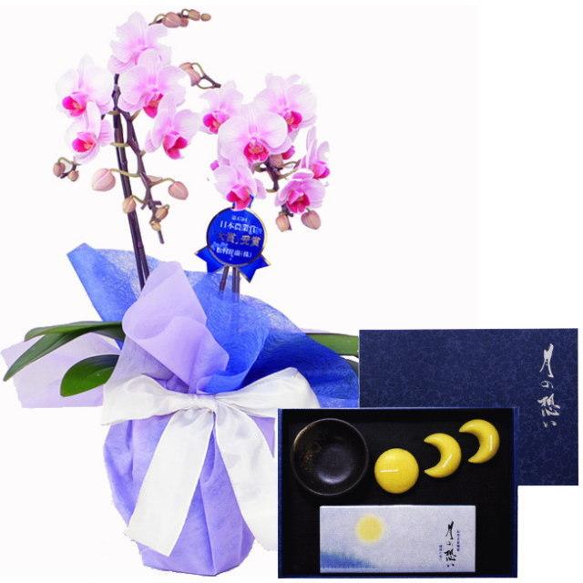 ミディ胡蝶蘭 ピンク色 2本立ち 丸叶むらたのお線香&ローソク 月の想い お月さまろうそくギフト 蝋梅の香り #TO-05 セット