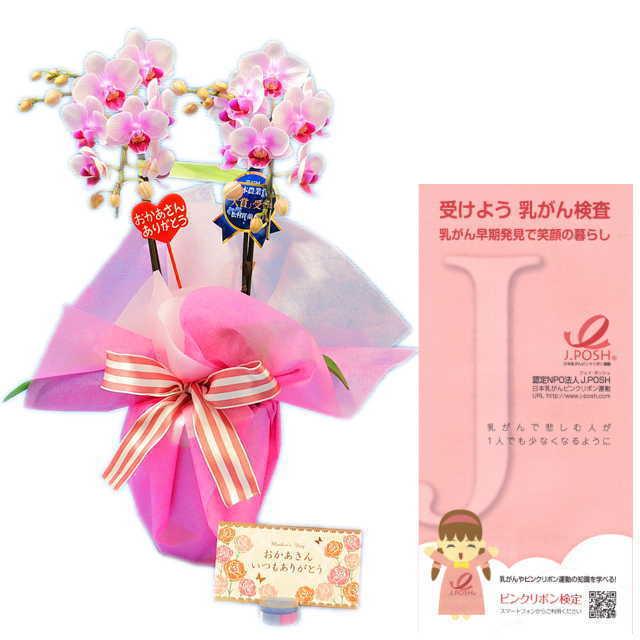 母の月 母の日ピック メッセージカード付き ピンクリボン 運動 応援 ミディ胡蝶蘭 お祝い 2本立 ピンク色