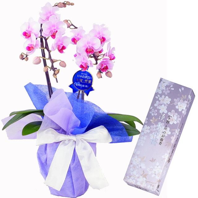 特選 ミディ胡蝶蘭 2本立ち ピンク色 お供えラッピング 日本香堂のお線香 宇野千代 淡墨の桜 小バラ詰 セット
