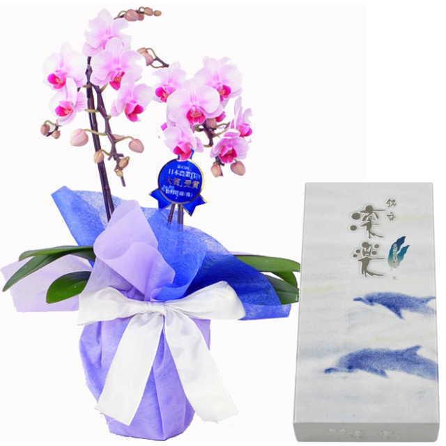 ミディ胡蝶蘭 線香セット 2本立 ピンク色 丸叶むらた 銘香 凛楽 天然海藻配合 バラ詰 約80g