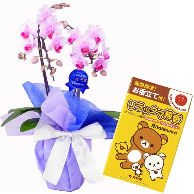 胡蝶蘭 2本立ち ピンク色 ランラン リンリン ギフト ミニ ミディ 小さい 小型 テーブル 送料無料 お供え 法事 カメヤマ リラックマ線香