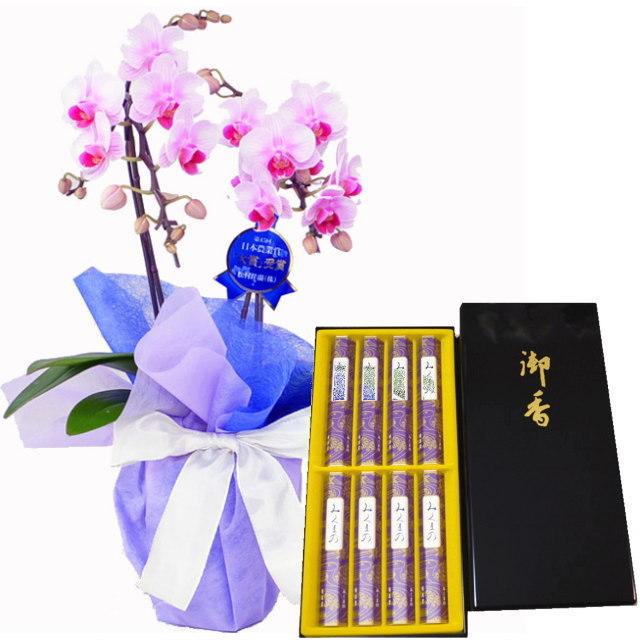 胡蝶蘭 ミディ 線香 セット 鳩居堂 みくまの 進物 熨斗 リンリン ランラン ピンク色