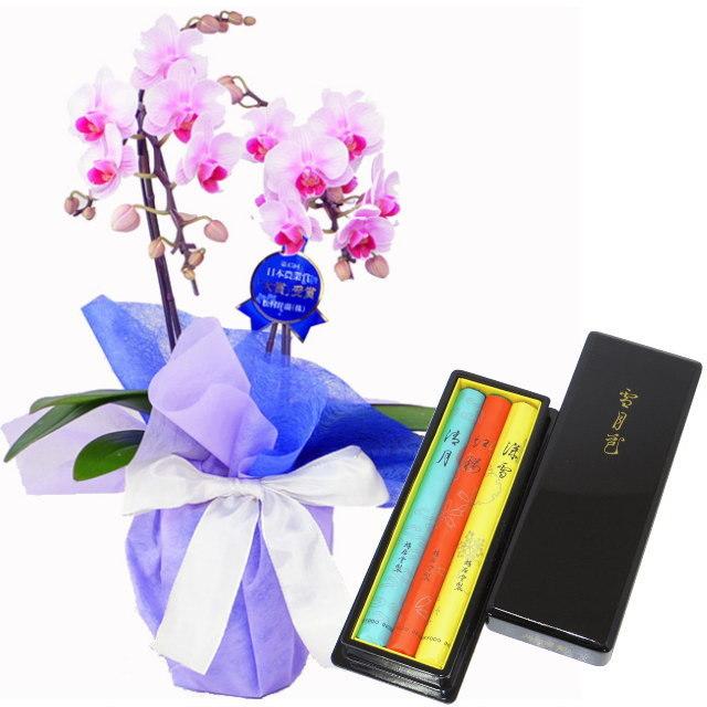 ミディ胡蝶蘭 ピンク色 2本立ち 鳩居堂のお線香 雪月花 セット