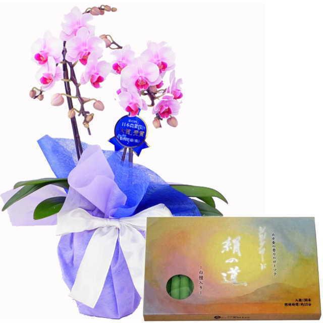 ミディ胡蝶蘭 ローソクセット 2本立 ピンク色 丸叶むらた ろうそく シルクロード 絹の道 灯 白檀の香り 36本入
