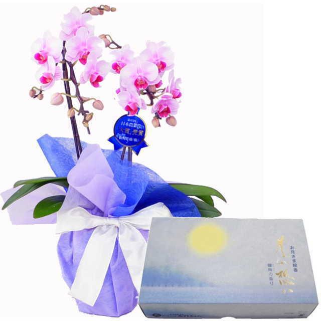 ミディ胡蝶蘭 線香セット 2本立 ピンク色 丸叶むらた 月の想い お月さま線香 大バラ