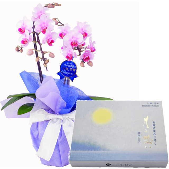 ミディ胡蝶蘭 ローソクセット 2本立 ピンク色 丸叶むらた ろうそく 月の想い お月さまろうそく 56本入
