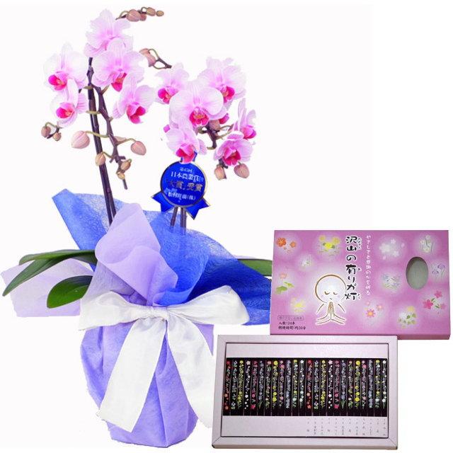 ミディ胡蝶蘭 ピンク色 2本立ち 丸叶むらたのお線香 沢山の有りが灯 香 24本入 セット