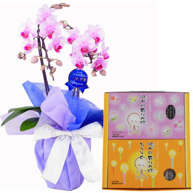 ミディ胡蝶蘭 ピンク色 2本立ち 丸叶むらたのお線香 沢山の有りが灯ギフト Aセット