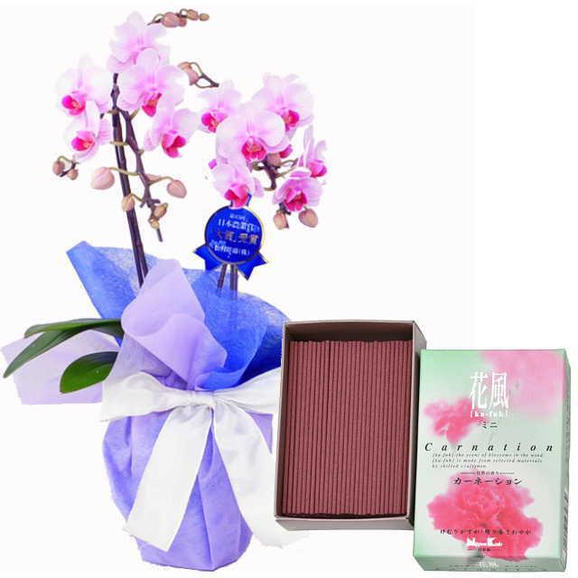 ミディ胡蝶蘭 線香セット 2本立 ピンク色 日本香堂 花風 カーネーション ミニ