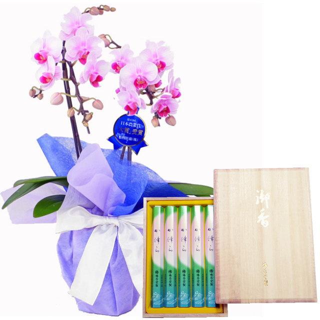 ミディ胡蝶蘭 ピンク色 2本立ち 鳩居堂のお線香 か津ら セット