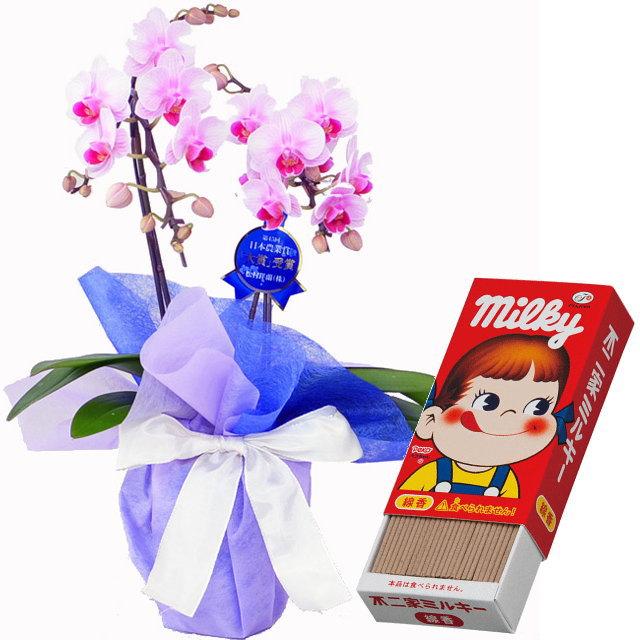 胡蝶蘭 2本立ち ピンク色 ランラン リンリン ギフト ミニ ミディ 小さい 小型 テーブル 送料無料 お供え カメヤマ ミルキー