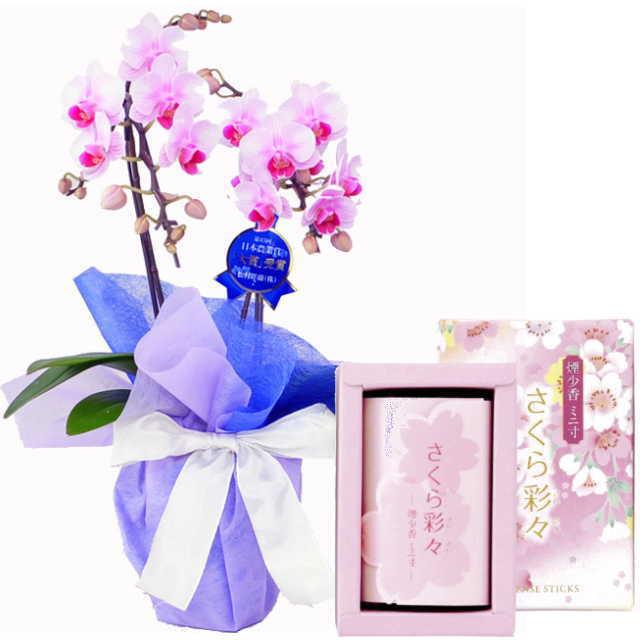 ミディ胡蝶蘭 線香セット 2本立 ピンク色 マルエス さくら彩々 煙少香 ミニ寸