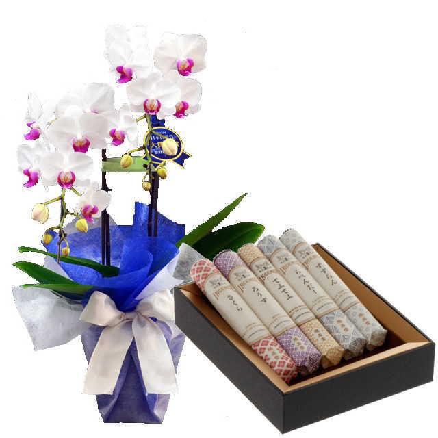 ミディ胡蝶蘭 線香セット 2本立 ユミ 赤リップ色 鳩居堂 線香組合せ 花の香り