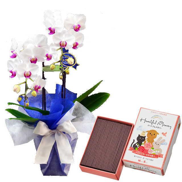 ミディ胡蝶蘭 2本立 ミディ ユミ 赤リップ色 お供え ペット 日本香堂 ハートフルメモリー お花の香り