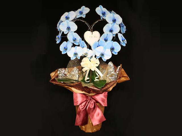 ハート型の青い胡蝶蘭(ブルーエレガンス)[二本立ち]~誕生日などにおすすめ【送料無料】