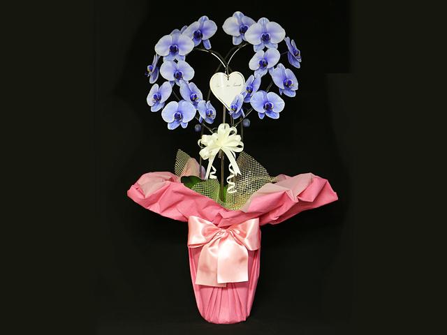 ハート型の紫の胡蝶蘭(パープルエレガンス)[二本立ち]~誕生日などのお祝いにおすすめ【送料無料】