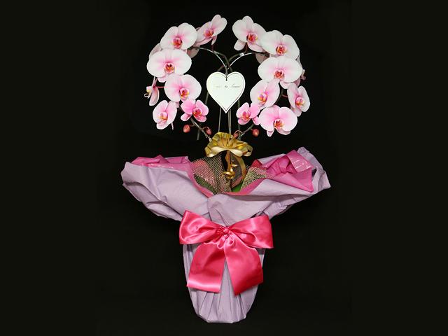ハート型のピンクの胡蝶蘭(ピンクエレガンス)[二本立ち]~開店祝い・誕生日・記念日などのお祝いにおすすめ【送料無料】