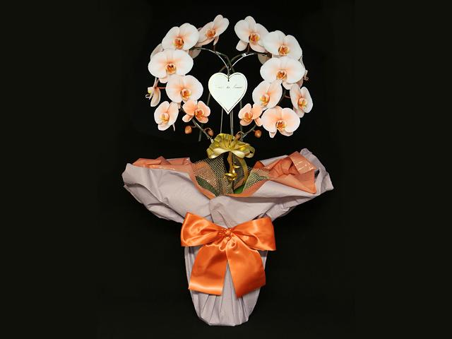 ハート型のオレンジの胡蝶蘭(オレンジエレガンス)[二本立ち]~お届け地域限定商品~開店祝い・誕生日・記念日などのお祝いにおすすめ【送料無料】