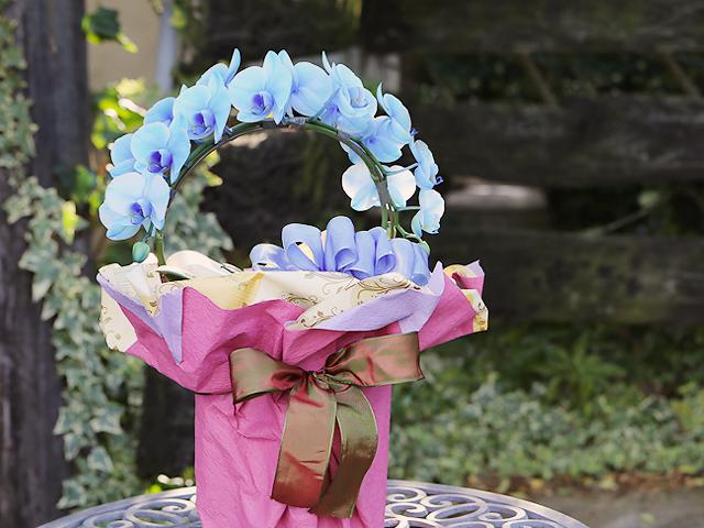 【9/19~9/28到着限定】青いミディ胡蝶蘭(ブルーエレガンス)[リング型]松浦園芸【送料無料】|誕生日・記念日・お祝いなどの贈り物におすすめの珍しいフラワーギフト