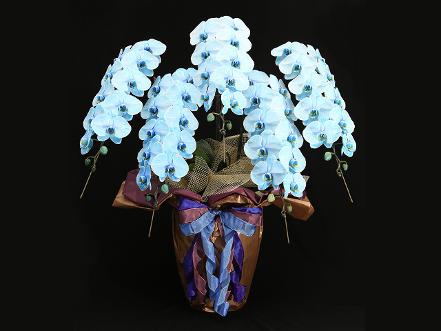 60輪の青い胡蝶蘭(プレミアムブルーエレガンス)[5本立ち]【送料無料】|就任・昇進祝い叙勲・褒章祝いなどの贈り物におすすめの珍しいフラワーギフト