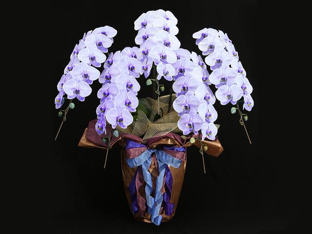 60輪の紫の胡蝶蘭(プレミアムパープルエレガンス)[5本立ち]【送料無料】|就任・昇進祝い叙勲・褒章祝いなどの贈り物におすすめの珍しいフラワーギフト