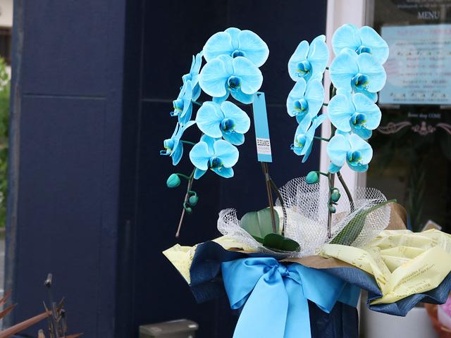 <夏季限定>マリンエレガンス[2本立ち]【送料無料】|誕生日・開店祝いなどの贈り物におすすめのフラワーギフト