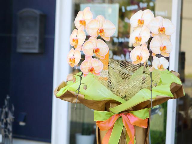 オレンジエレガンス[2本立ち]松浦園芸【送料無料】|誕生日のお祝いなどにおすすめのフラワーギフト