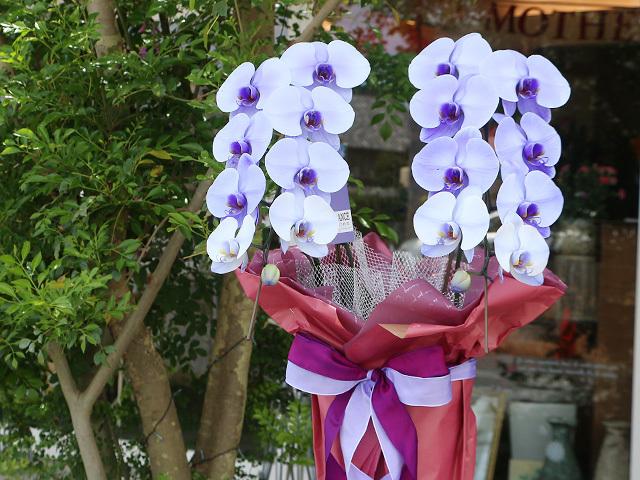 紫の胡蝶蘭(パープルエレガンス)[2本立ち]松浦園芸【送料無料】|誕生日などお祝いの贈り物におすすめのフラワーギフト