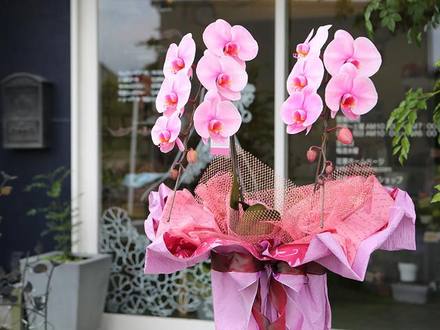 ピンクエレガンス[2本立ち]松浦園芸【送料無料】|誕生日のお祝いなどにおすすめのフラワーギフト
