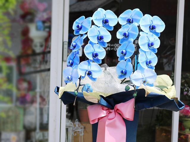 青い胡蝶蘭(ブルーエレガンス)[2本立ち]【送料無料】|誕生日などお祝いの贈り物におすすめのフラワーギフト