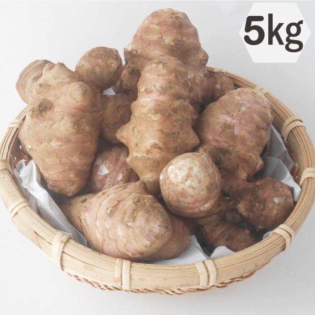 綿部農園栽培の菊芋(紫)5kg 栃木の有機栽培農園が作る自慢の菊芋