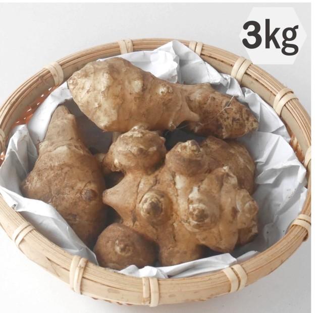 バンビ農園栽培の菊芋(白)3kg 栃木の有機栽培農園が作る自慢の菊芋