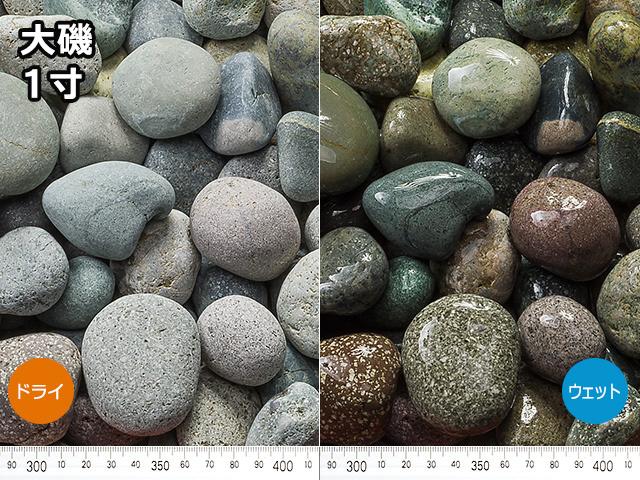 大磯(フィリピン産) 20kg 1寸