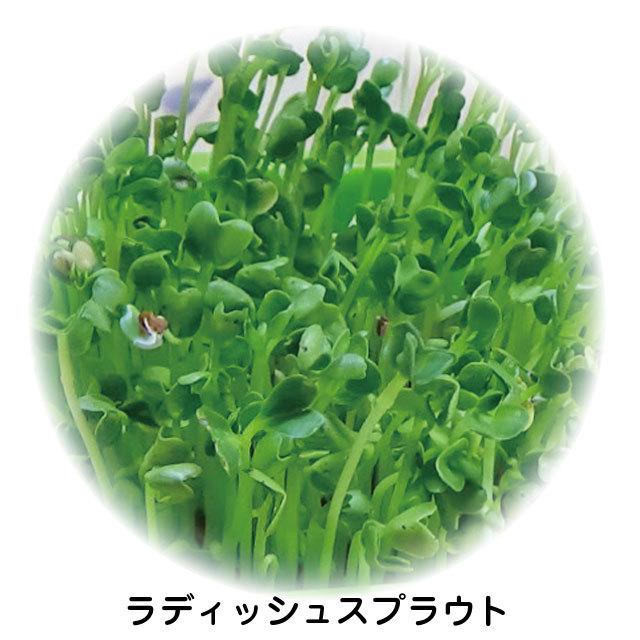 有機種子らでぃっしゅスプラウト