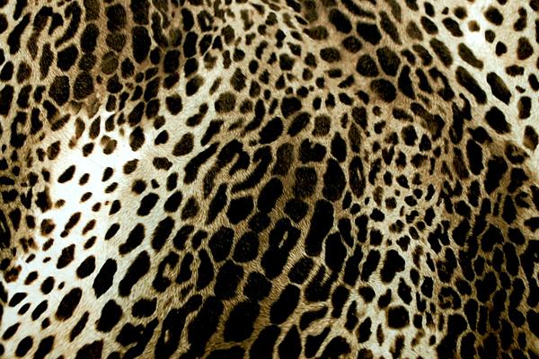 お値打ち ダブル巾(148cm巾)の ナイロンタフタ ひょう柄 ダークブラウン