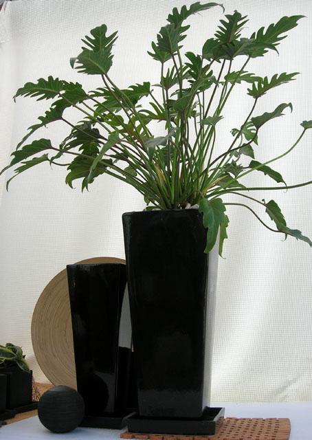 観葉植物・クッカバラ スタイリッシュ ノワールロングスクエアM