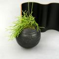 リプタンサス黒幻・地球鉢
