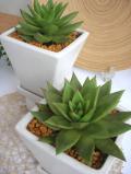 アガボイデス 四角い陶器鉢
