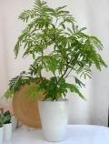 エバーフレッシュ プレーンポット観葉植物通販・販売