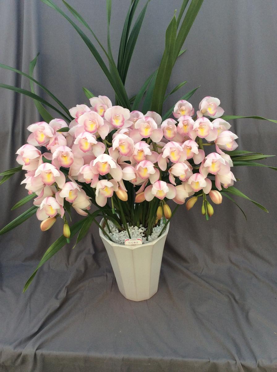 シンビジューム ピンク系  アーチ 4本立ち以上【送料無料】※お花の品種は画像と異なる場合がございます。