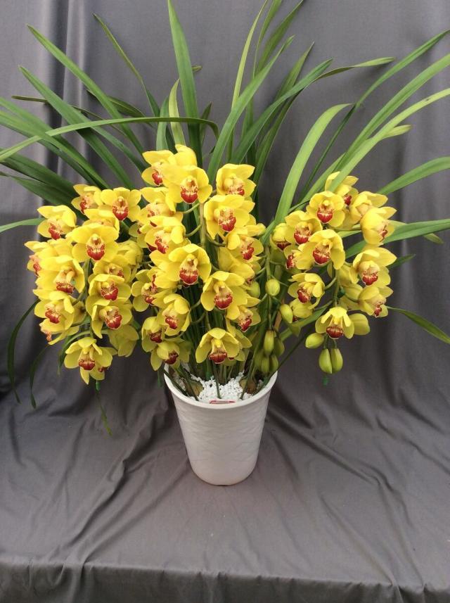 シンビジューム イエロー系  アーチ 5本立ち以上【送料無料】※お花の品種は画像と異なる場合がございます。