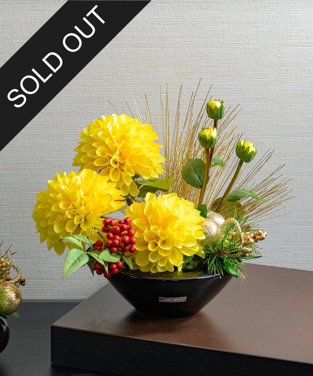 【先行予約】迎春ダリアM21-y