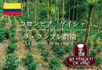 コロンビア ゲイシャ ラ・クンブレ農園 (ウォッシュド/ダブルファーメンテーション)/ コーヒー豆