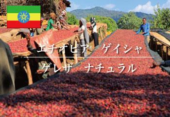 エチオピア ゲイシャ ゲレザ (ナチュラル) / コーヒー豆