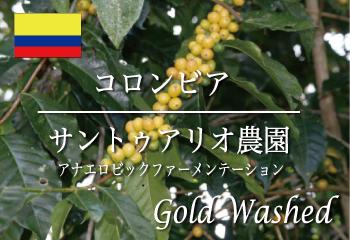 コロンビア サントゥアリオ農園 ゴールドウォッシュド(アナエロビックファーメーテーション) / コーヒー豆