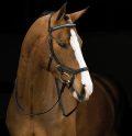 HORSEWARE Rambo Micklem Diamante Conpetition Bridle (ホースウエア・ランボー ミックレム ディアマンテ頭絡)